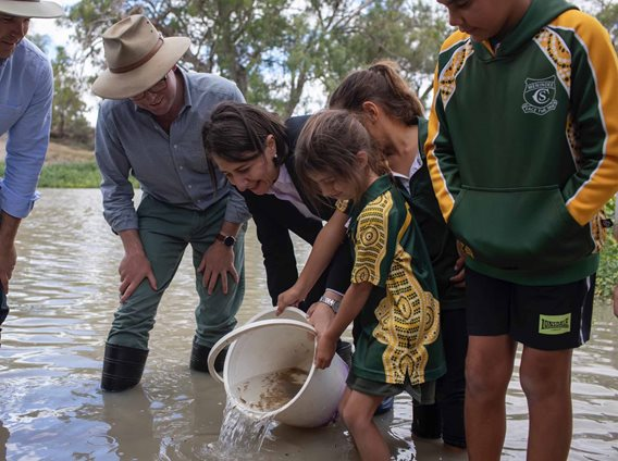 60,000 MURRAY COD RELEASED BACK INTO THE DARLING RIVER